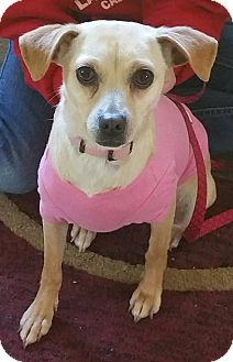 Terrier (Unknown Type, Small)/Terrier (Unknown Type, Small) Mix Dog for adoption in Gustine, California - PIPSI