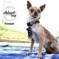 Adopt A Pet :: Trooper - Shawnee Mission, KS