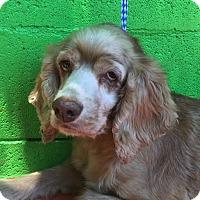 Adopt A Pet :: HANNAH - Irvine, CA