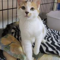 Adopt A Pet :: Sunshine - Westville, IN