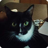 Adopt A Pet :: Avery (COURTESY POST) - Baltimore, MD