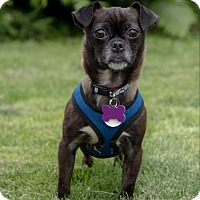 Adopt A Pet :: Sally - Wethersfield, CT