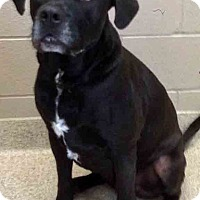 Adopt A Pet :: ADOPTED in CTS Archie - Oswego, IL