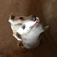 Adopt A Pet :: Sapphire - Prague, OK