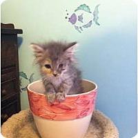 Adopt A Pet :: Mist - Richfield, OH