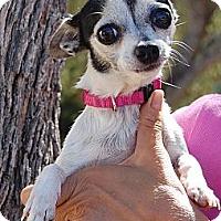 Adopt A Pet :: Bubbles - Creston, CA