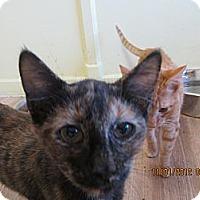 Adopt A Pet :: Pepper Potts - Bunnell, FL