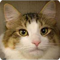 Adopt A Pet :: Donnie Trump - Lombard, IL