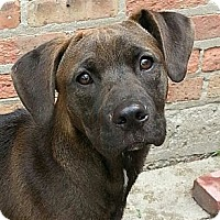 Adopt A Pet :: Hershey - Chicago, IL