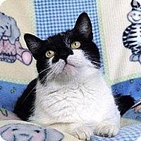 Adopt A Pet :: Fiona - Lansdowne, PA