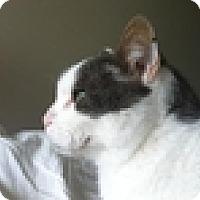 Adopt A Pet :: Leon - Vancouver, BC