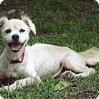 Adopt A Pet :: ANGEL BETH - Palm Coast, FL