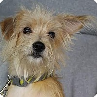 Adopt A Pet :: Emory - Minneapolis, MN