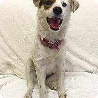 Adopt A Pet :: Robin - Mission Viejo, CA