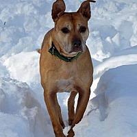 Pit Bull Terrier Mix Dog for adoption in Fredericksburg, Virginia - Judith