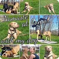 Adopt A Pet :: GRACIE - Grafton, OH