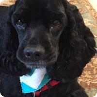 Adopt A Pet :: Elvis - Sugarland, TX
