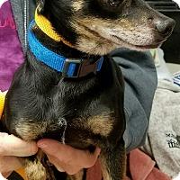 Adopt A Pet :: Hunter - Rockford, IL