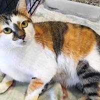 Adopt A Pet :: Naomi - Johnson City, TN