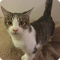 Adopt A Pet :: Artemis - Farmington, AR