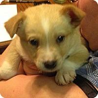 Adopt A Pet :: Babybel - Regina, SK