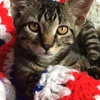 Adopt A Pet :: Sans - McHenry, IL