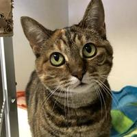 Adopt A Pet :: Ocie - Madison, WI