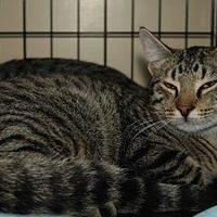 Adopt A Pet :: MEKA - Houston, TX