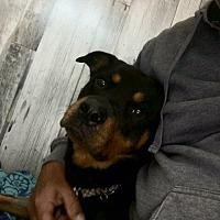 Adopt A Pet :: URGENT!! - Tali - Caledon, ON