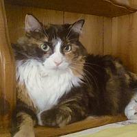 Adopt A Pet :: Agle & Silo URGENT - Fowlerville, MI
