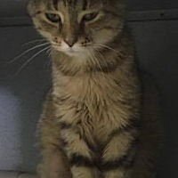 Adopt A Pet :: Neena - Mount Sterling, KY
