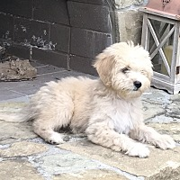 Adopt A Pet :: Fenton - cupertino, CA