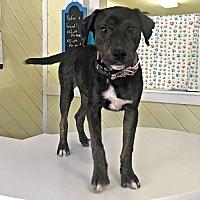 Adopt A Pet :: Mighty Jane - Williston Park, NY