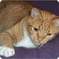 Adopt A Pet :: Dude - Spencer, NY