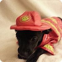 Adopt A Pet :: Jett - Mission Viejo, CA