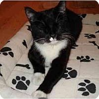 Adopt A Pet :: Cali - Montreal, QC