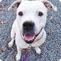 Adopt A Pet :: Winter - Medford, MA