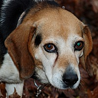 Adopt A Pet :: Donnie - Salem, WV