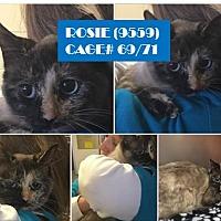 Adopt A Pet :: ROSIE - Flint, MI