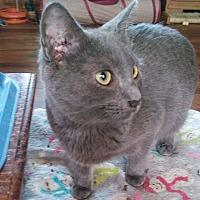 Adopt A Pet :: Bruce - Farmington, AR