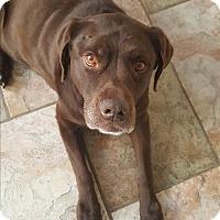 Adopt A Pet :: Hannah - Evergreen, CO