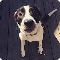 Adopt A Pet :: Cam - Goldsboro, NC