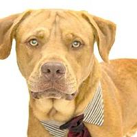 Adopt A Pet :: LION - Orlando, FL
