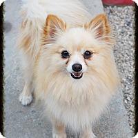Adopt A Pet :: Charleston - Los Alamitos, CA