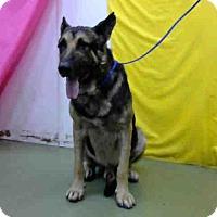 Adopt A Pet :: URGENT on 7/29@DEVORE San Bern - San Bernardino, CA