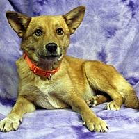 Adopt A Pet :: Barbara - Westminster, CO