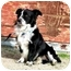 Photo 2 - Border Collie/Corgi Mix Dog for adoption in San Pedro, California - MO