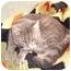 Photo 4 - Domestic Shorthair Cat for adoption in Morris, Pennsylvania - Minka
