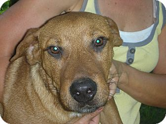 Hound (Unknown Type)/Labrador Retriever Mix Dog for adoption in Fort Valley, Georgia - Hank