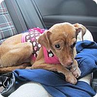Adopt A Pet :: Pumpkin - adoption pending - Warwick, NY